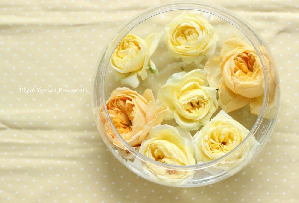 バラの復活法