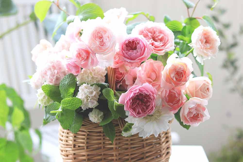 鉢植えアジサイとバラのアレンジの作り方