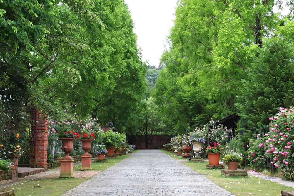 ウィッチフォードの鉢が並ぶ庭
