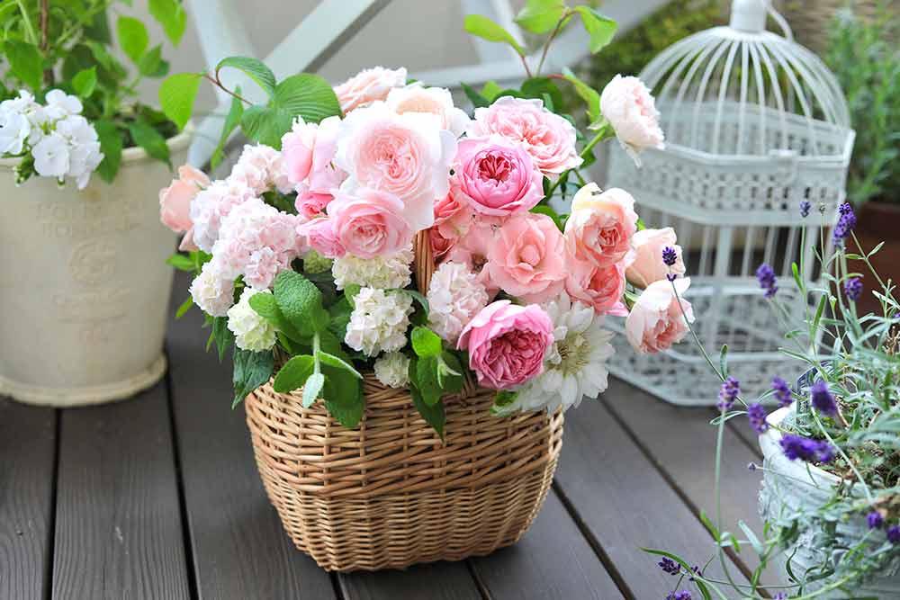 鉢植えアジサイとバラのアレンジ