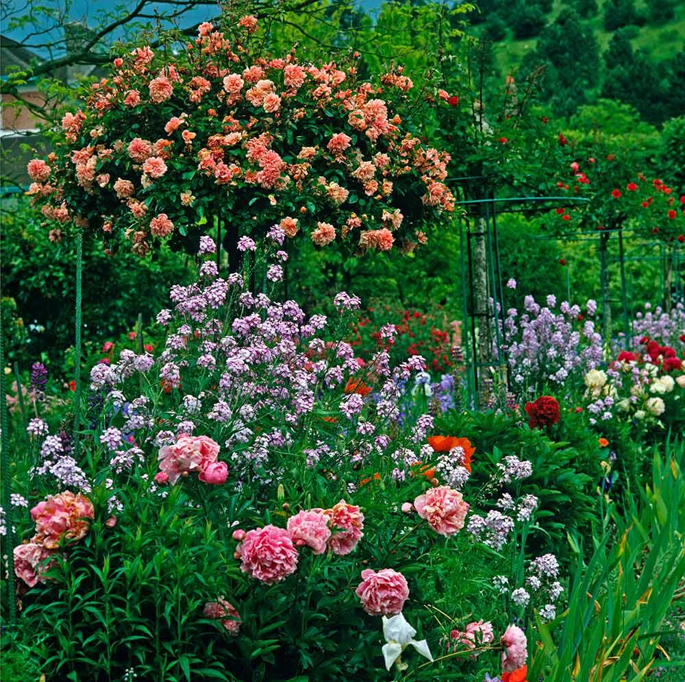 フランス、ジヴェルニーのモネの庭