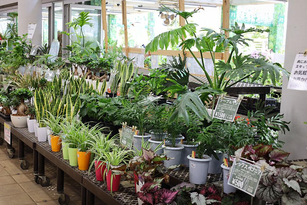 サカタのタネ ガーデンセンター横浜の観葉植物