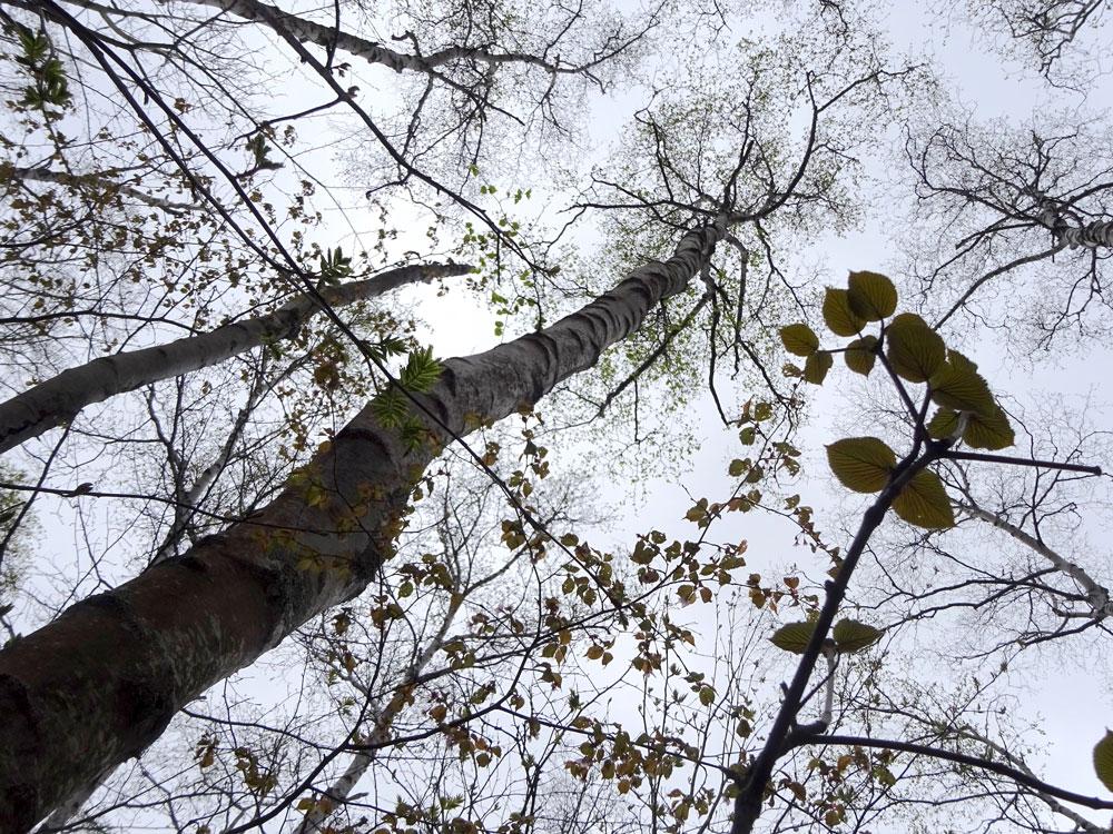 光の競争の結果、森は階層構造に