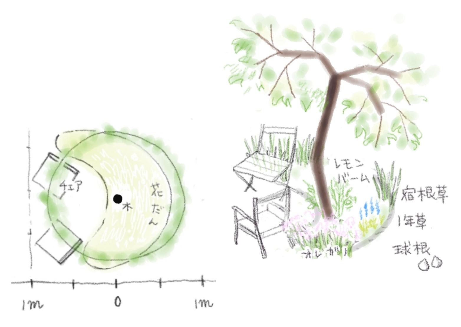 パラソル仕立ての木と庭