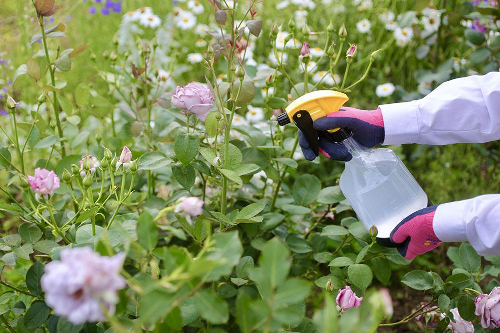 家庭園芸用カリグリーン