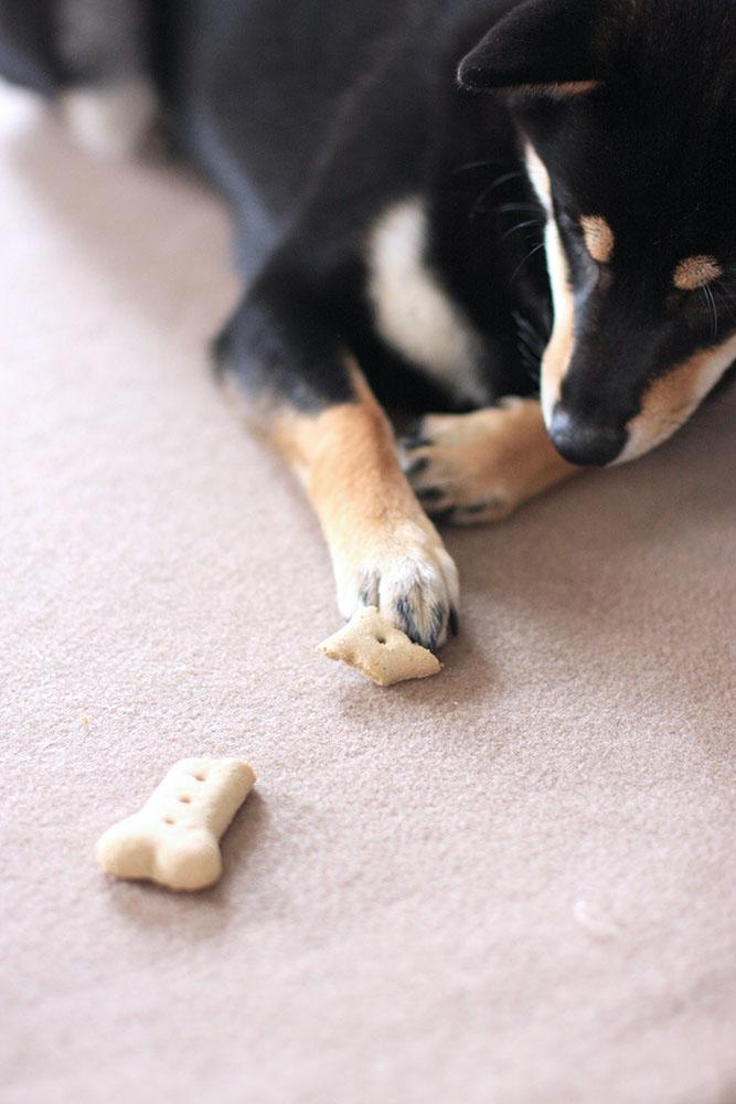 犬用ビスケット