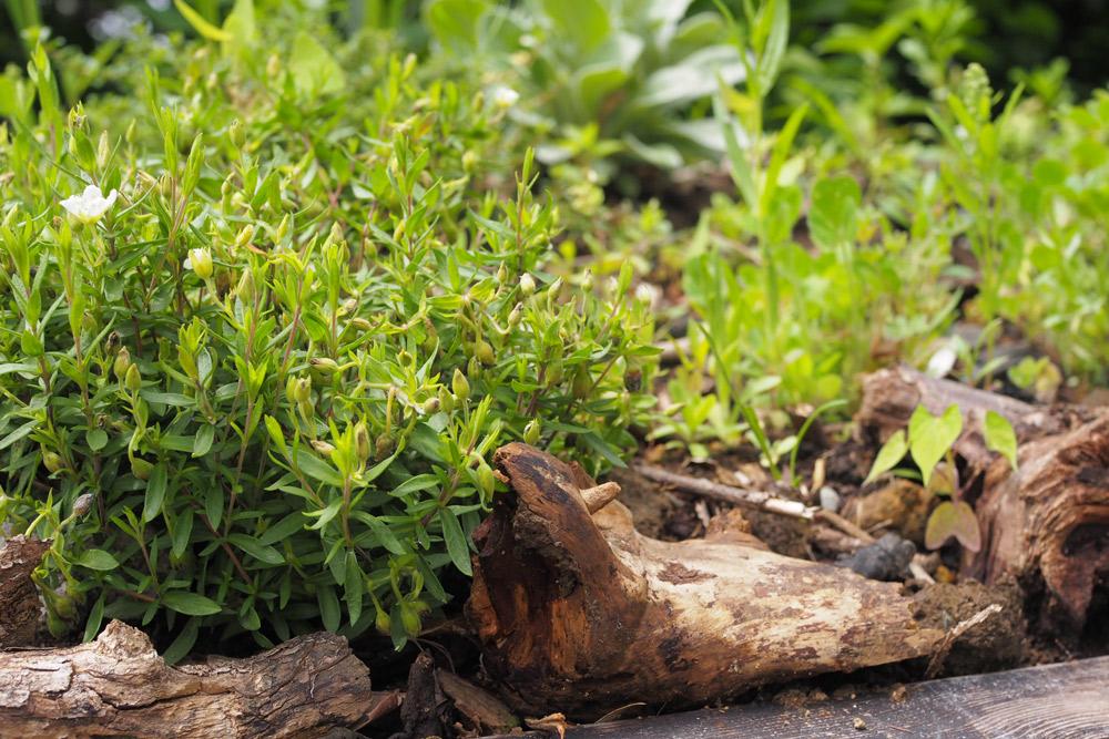 薪棚の草屋根施工③花苗を植え込む