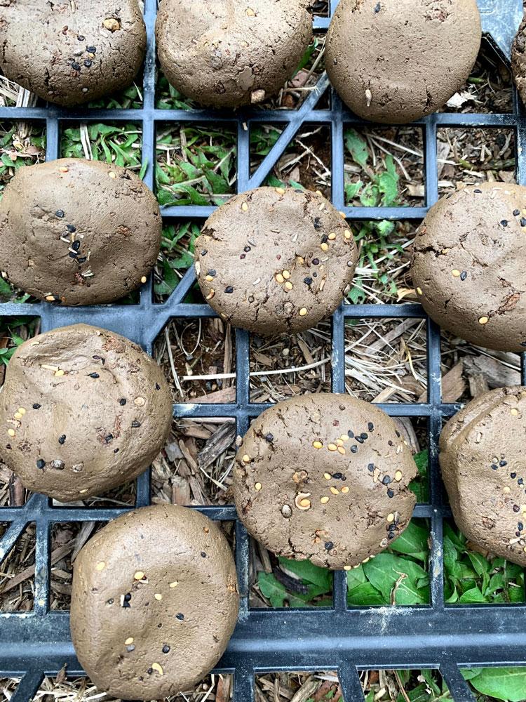 ケト土と培養土を混ぜて泥団子を作る
