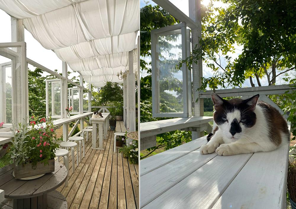 猫のいる庭