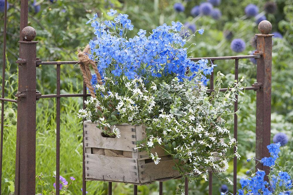 青と白の寄せ植え