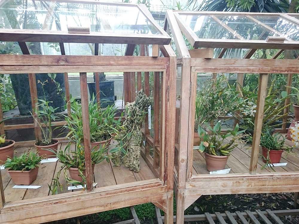 カトレアの栽培