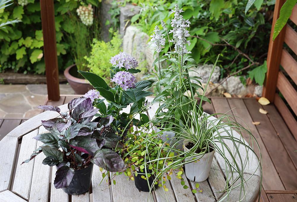 夏の寄せ植えの作り方
