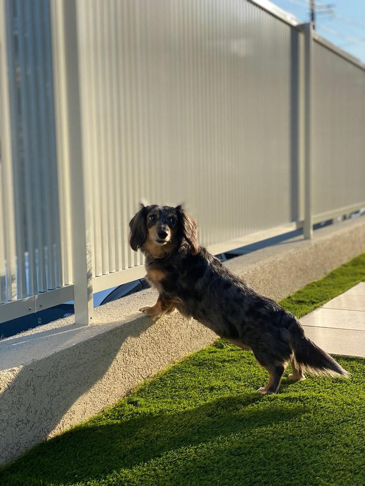 愛犬の安全を守るためのフェンスの高さ