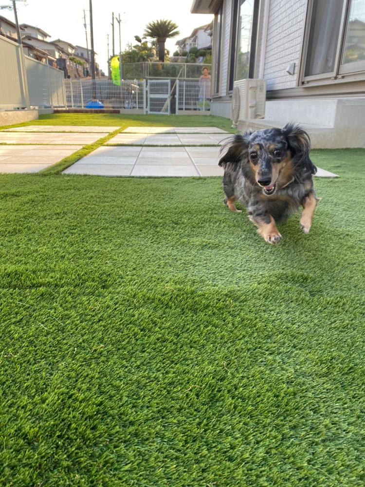 犬にとって心地よい庭作りのポイント/床面の整備