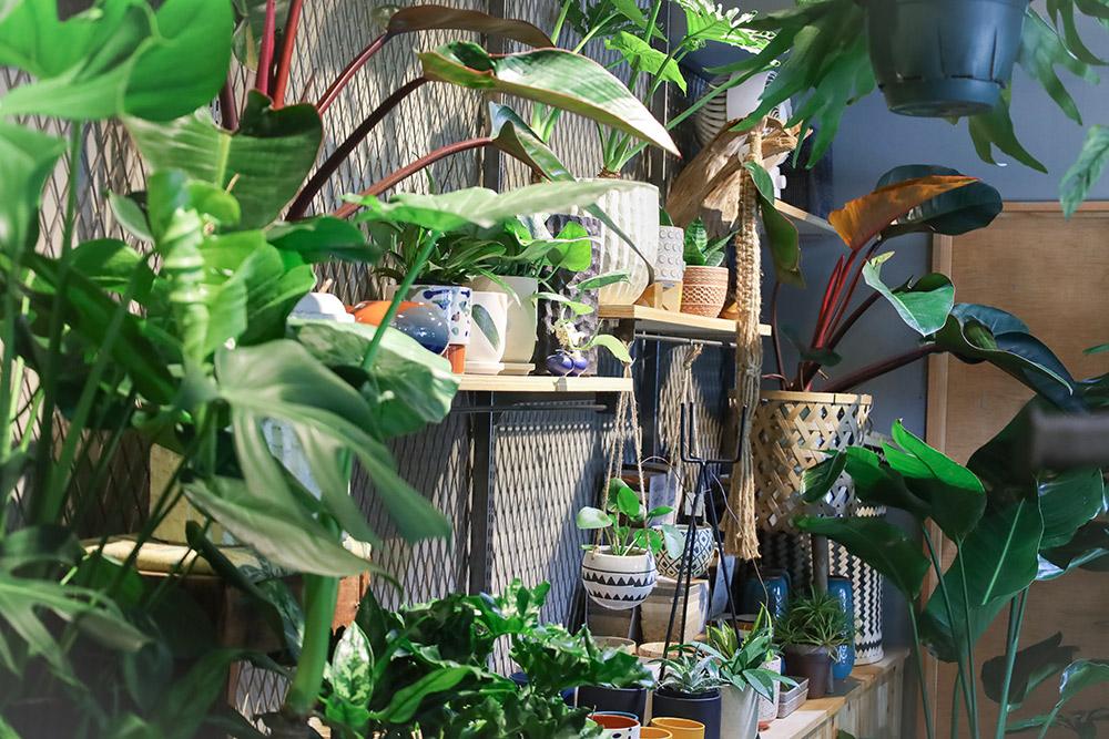 園芸店「OOLJEE(オールジイ)」のミニグリーン