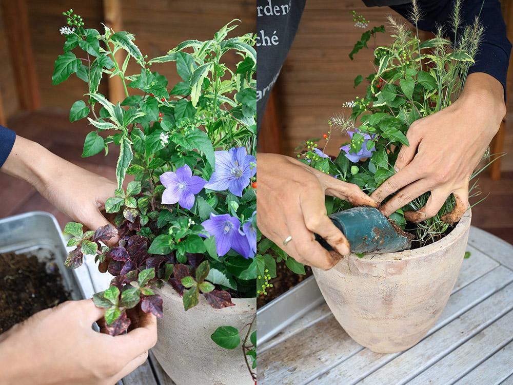 初秋の寄せ植えの作り方