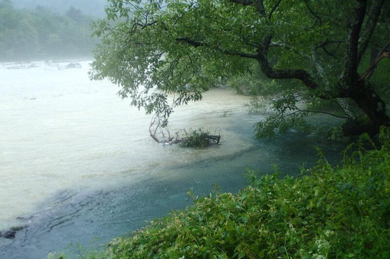 上流からの濁り水の本流と透明な湧き水が交わる