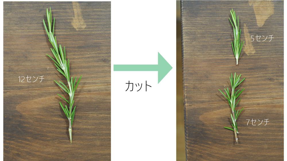 花材を7cm程度にすべてカットし、足元の葉を取り除きます