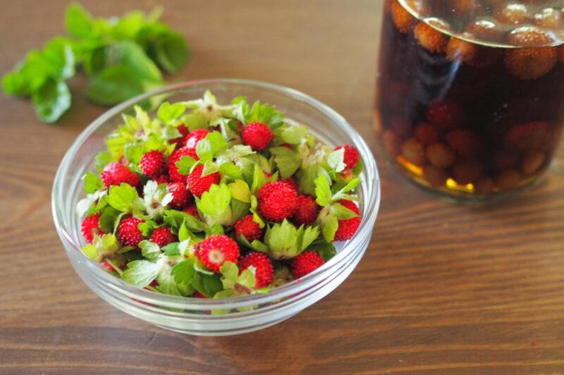 【庭で採れたハーブ活用レシピ】ヘビイチゴのチンキを作ろう