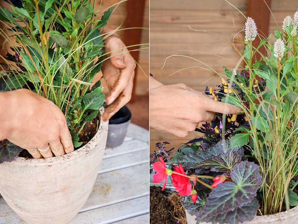 秋の寄せ植え作り