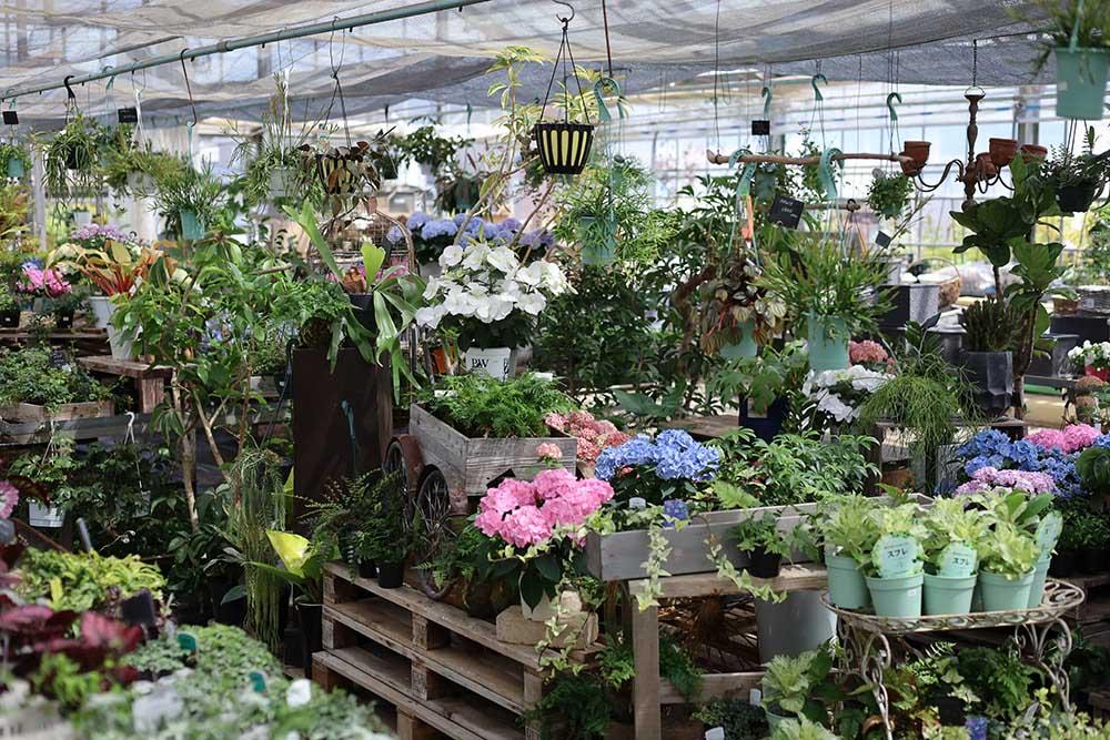 ルーシーグレイの温室
